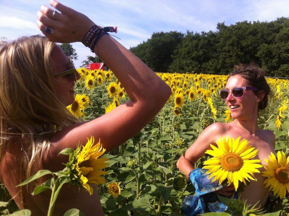 sunflower fields sgp